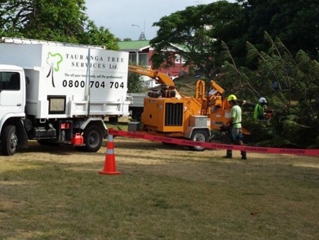 Tauranga Tree Services working